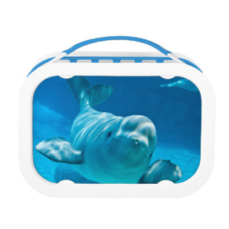 Beluga Whale Lunch Box