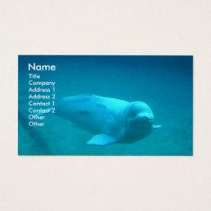 Beluga Whale Photo Business Card at Zazzle