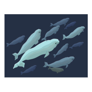 Beluga Whale Postcards Canadian Beluga Whale Cards