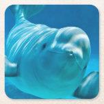 Beluga Whale Square Paper Coaster