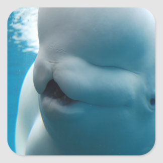Beluga Whale  Stickers