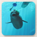 Beluga Whales Drink Coaster