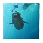 Beluga Whales Tile