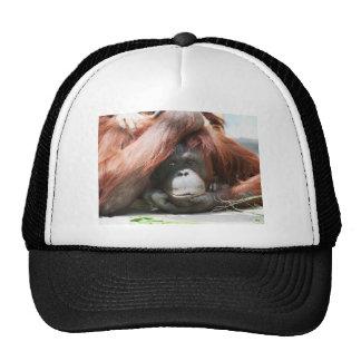 Bemused Trucker Hat