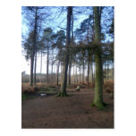 Bench in Delamere Forest Post Card