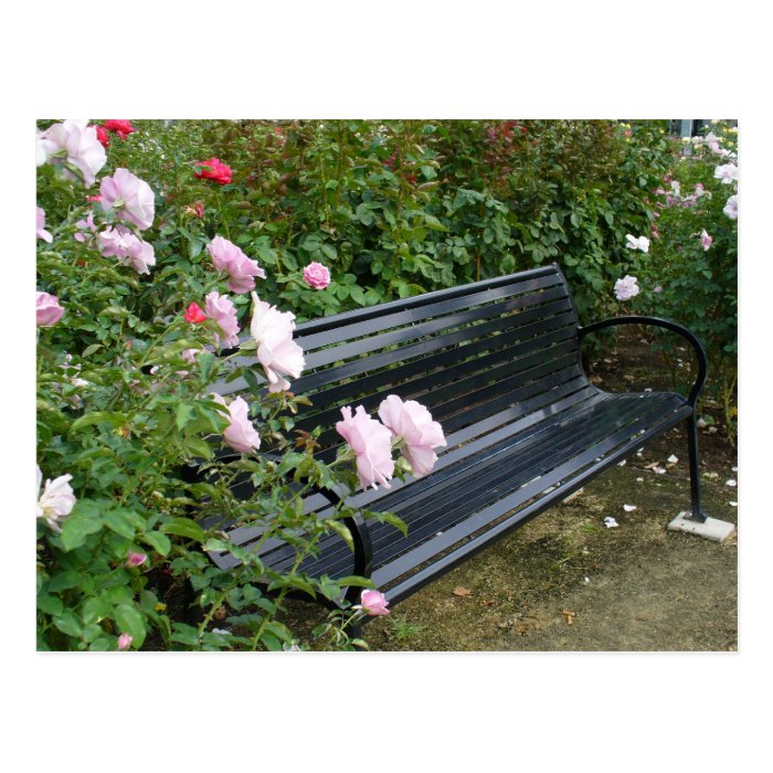 Bench in the Roses Postcard