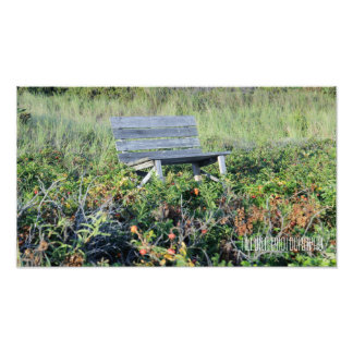 Bench of Flowers Photo