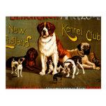 Bench Show. New England Kennel Club Postcard