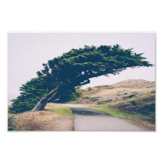 Bending Coastal Tree | Photo Print