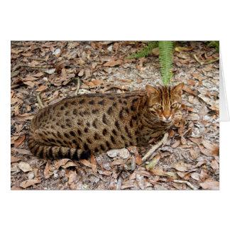 Bengal Cat 002 Card