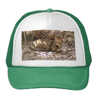Bengal Cat 13 Trucker Hat