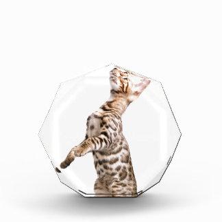 Bengal Cat Award