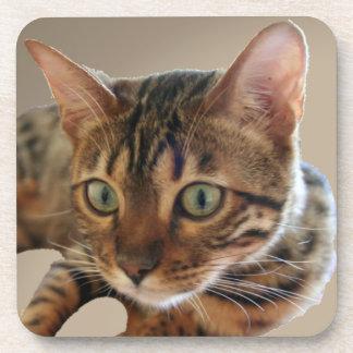 Bengal Cat Beverage Coaster
