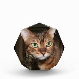 Bengal Cat Close Up Acrylic Award