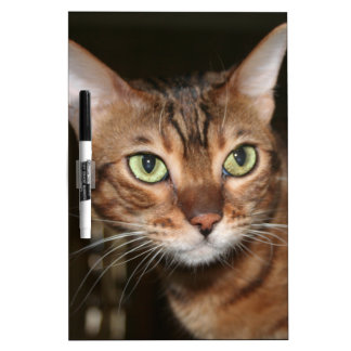 Bengal Cat Close Up Dry Erase White Board