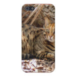 Bengal Cat  Covers For iPhone 5