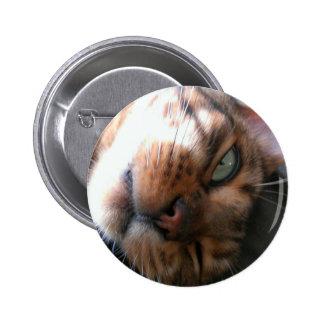 Bengal cat crazy pinback button