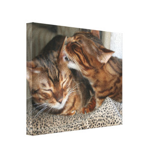 Bengal Cat Kiss Gallery Wrapped Canvas