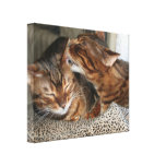 Bengal Cat Kiss Canvas Print