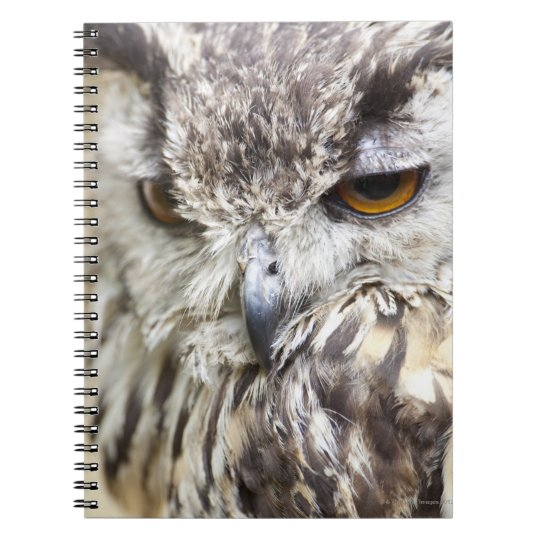 Bengal Eagle Owl Notebook