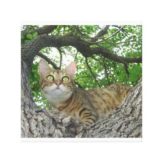 Bengal in Tree Canvas Print