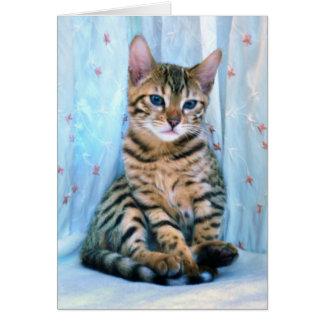 Bengal Kitten Cards