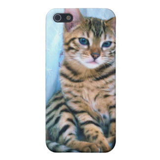 Bengal Kitten Cover For iPhone 5