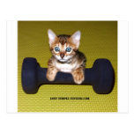 bengal kitten exercising postcard