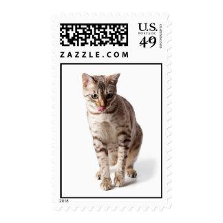 Bengal Kitten licking lips Stamps