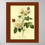 Bengal Rose 16 X 20 Posters