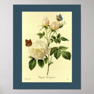 Bengal Rose Poster