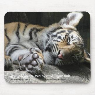 Bengal/Sumatran hybrid Tiger cub Mouse Pads