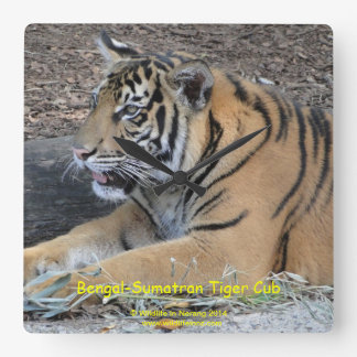 Bengal-Sumatran Tiger Cub Square Wall Clock