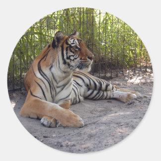 Bengal TIger-001 Classic Round Sticker
