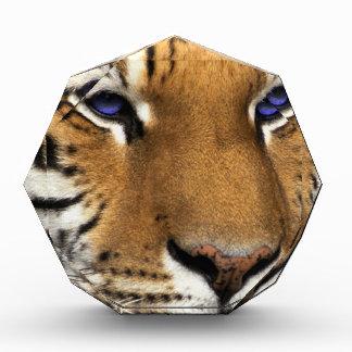 Bengal Tiger Animal Print blue Eyes Acrylic Award