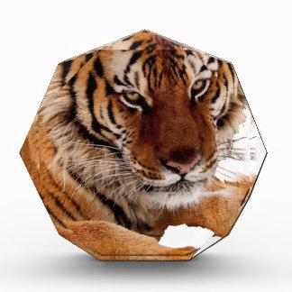 Bengal Tiger Acrylic Award