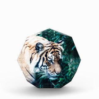 Bengal Tiger Awards