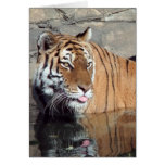 Bengal Tiger Blank Vertical Note Card