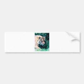 Bengal Tiger Bumper Sticker