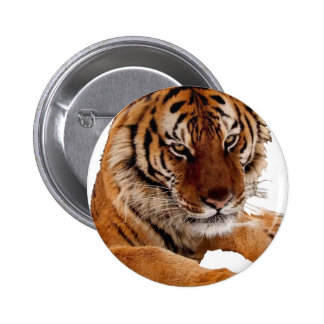 Bengal Tiger Pins
