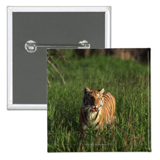 Bengal tiger button