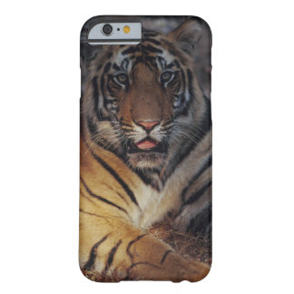 Bengal Tiger Cub Barely There iPhone 6 Case