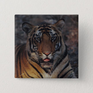 Bengal Tiger Cub Button