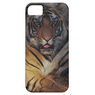 Bengal Tiger Cub iPhone 5 Covers