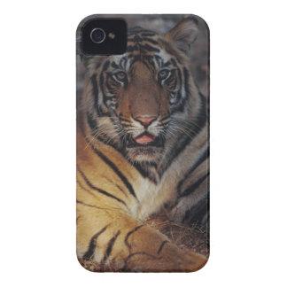 Bengal Tiger Cub Case-Mate iPhone 4 Cases