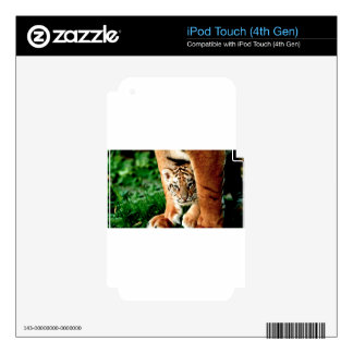Bengal Tiger Cub Peers Out Skins For iPod Touch 4G