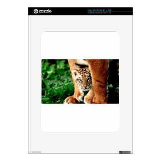 Bengal Tiger Cub Peers Out Skins For The iPad