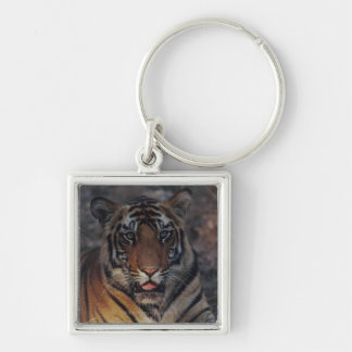 Bengal Tiger Cub Silver-Colored Square Keychain