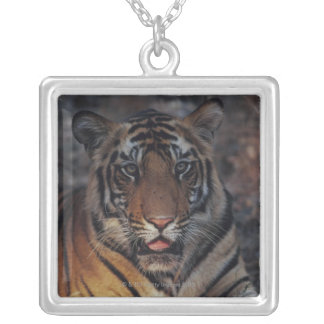 Bengal Tiger Cub Silver Plated Necklace