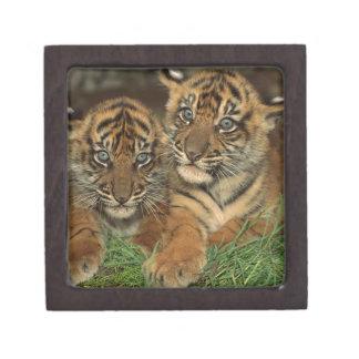 Bengal Tiger Cubs Jewelry Box